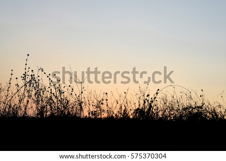 Grass Silhouettes background sunset.