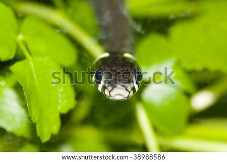 grass snake - stock photo