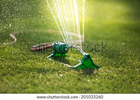 Grass sprinkler. backlight, shallow depth of field - stock photo