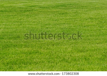 grass texture as background - stock photo