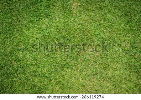 grass texture background - stock photo