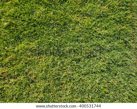 grass texture close up