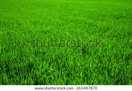 grass texture from a field - stock photo