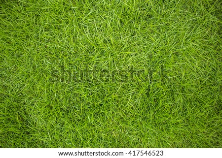 Grass top view
