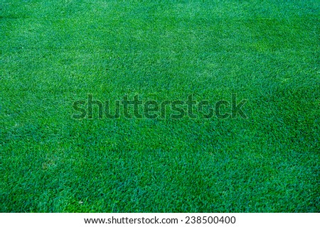 Grass-Top view-Background