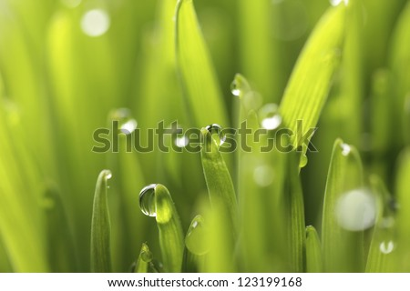 grass water drops - stock photo