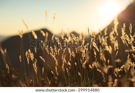 Grass waving in the wind during a sunset in the Swiss mountains. - stock photo