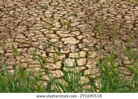 Grass weeds growing above ground parched by drought since the rain season. - stock photo