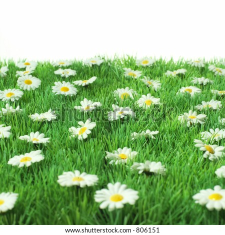 grass with daisies - stock photo