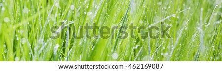 grass with dew drops - a beautiful bokeh background