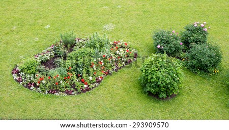 Grass with different flowered bed, nature background. Close-up view - stock photo