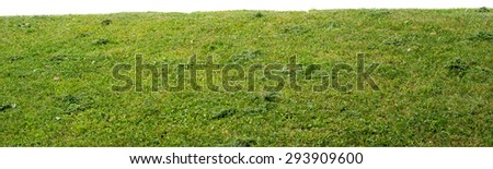 Grass with different plants, nature background. Close-up view - stock photo