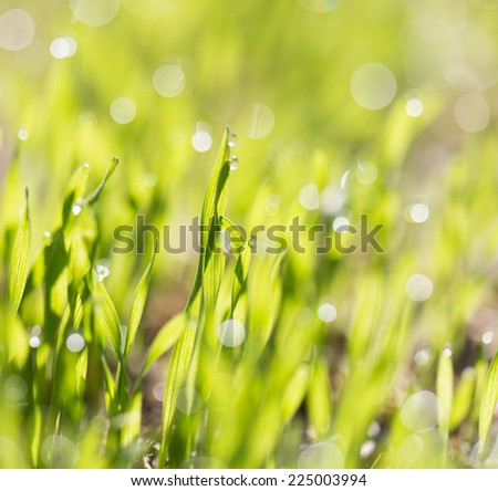grass with drops of dew