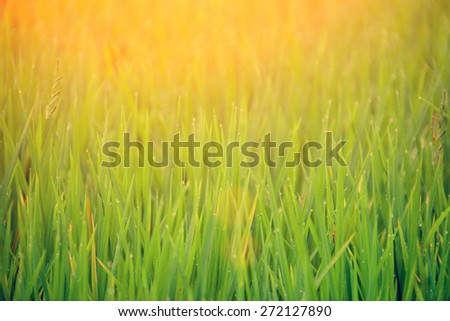 Grass with drops of morning dew - stock photo