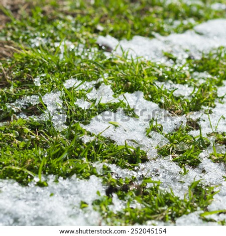 grass with melting snow - stock photo