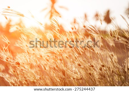 Grass with morning light