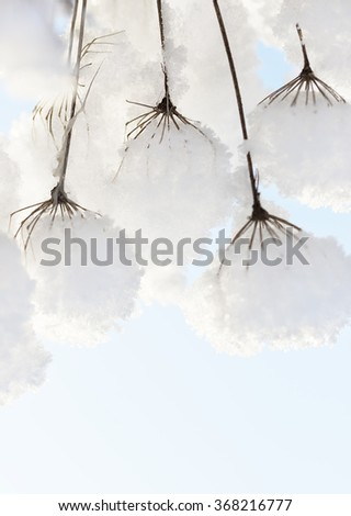 Grass with snow caps