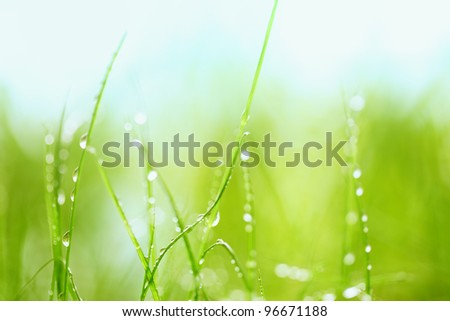 Grass with water drops?Closeup - stock photo