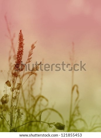Grasses and Weeds