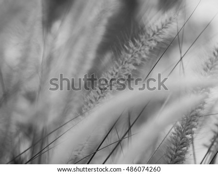 grasses flowers in vintage background, black and white.