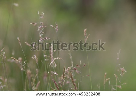 Grasses with seeds creating a natural background of a nature meadow with muted tones and colours.