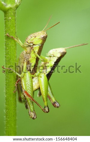 Grasshopper in the wild.