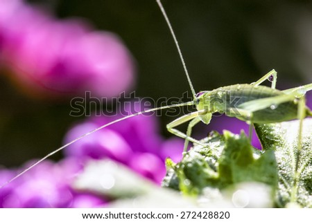 Grasshopper Macro for adv or others purpose use - stock photo