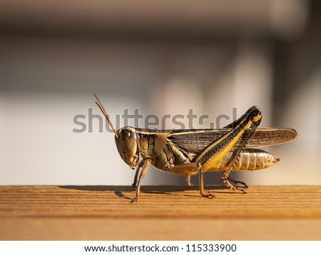 Grasshopper on a fence - stock photo