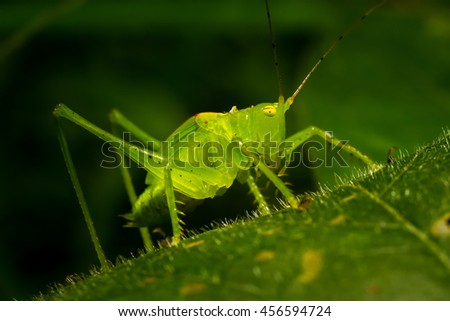 Grasshopper resting on a leaf.