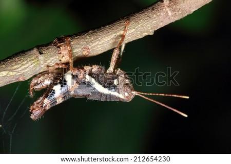 Moth On Branch Lemons ...