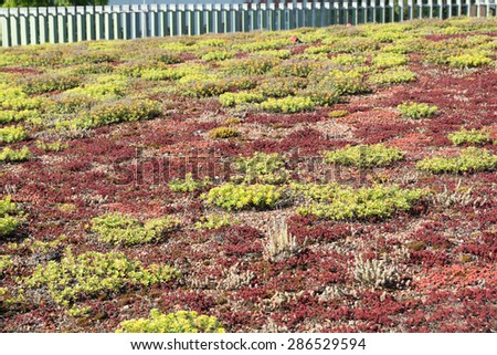 Grassing on a roof / Green Roof - stock photo