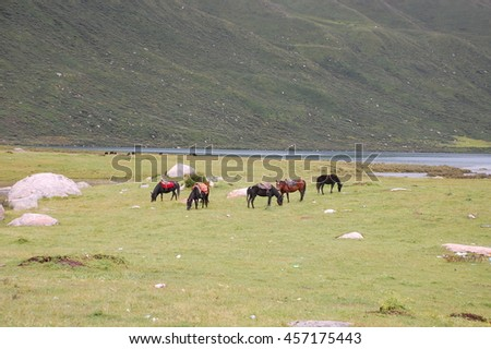 Grassland and Lake in Sichuan