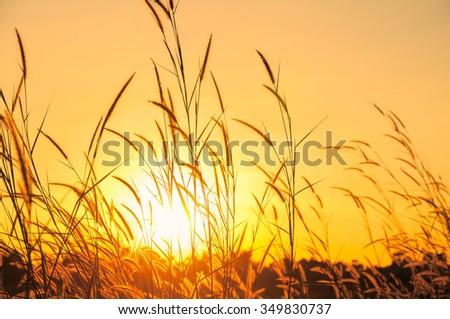 Grassland and sun in the morning.