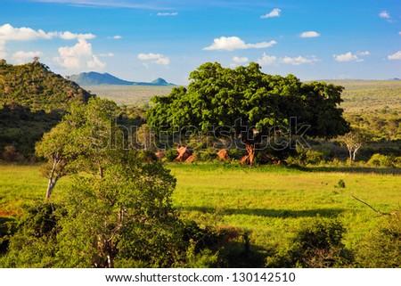 Grassland with rich flora, savanna and bush landscape in Africa. Tsavo West, Kenya. - stock photo