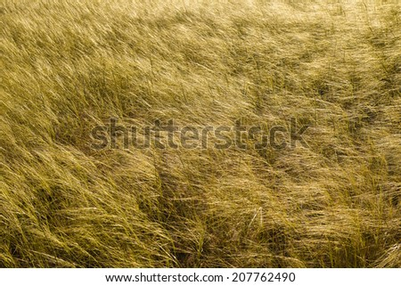 Grasslands 1 - stock photo