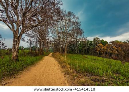 Grasslands walkway,Khao Yai National Park Thailand - stock photo