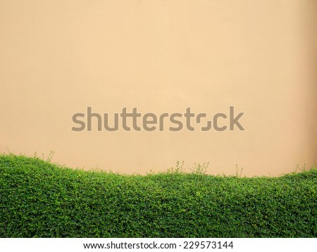 grassward and orange wall background - stock photo