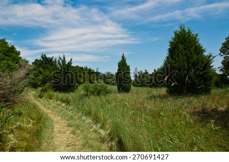 Grassy and curved walking path through a nature park