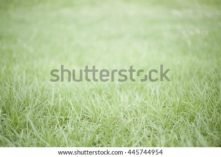 Grassy field - stock photo