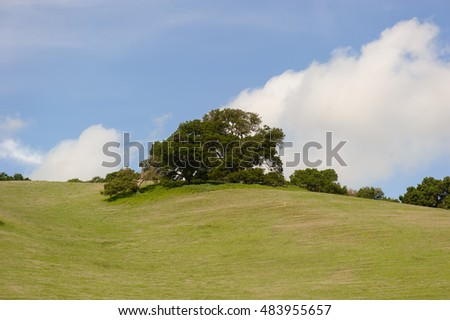 grassy field and trees with blue sky on background