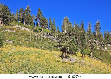 Grassy hillside with trees and pine trees