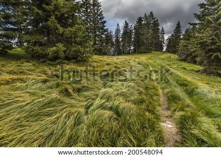 Grassy landscape in the mountains before storm - stock photo