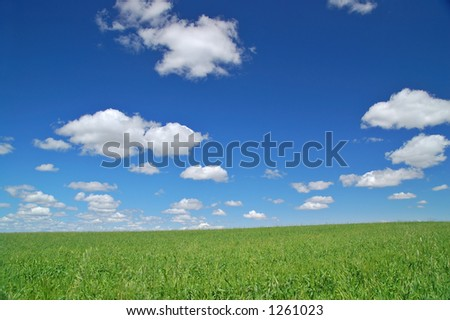 grassy meadow in the spring