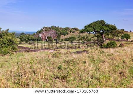Grassy savanna, bush. Landscape of Africa. Tsavo West, Kenya. - stock photo