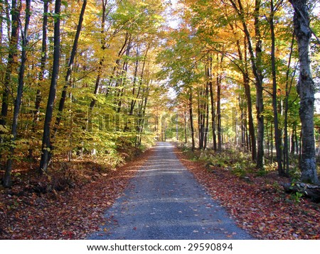 gravel road in autumn forest