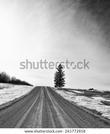 Gravel road leading uphill to one spruce tree in rural black and white landscape