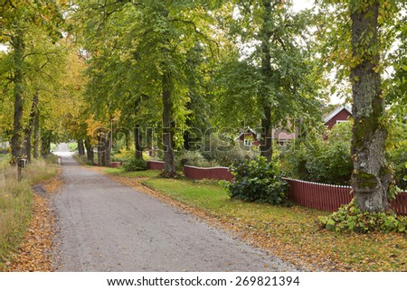 Gravel road surrounded of trees and fences. Colorful environment in October. Garden and houses beyond the fence. - stock photo