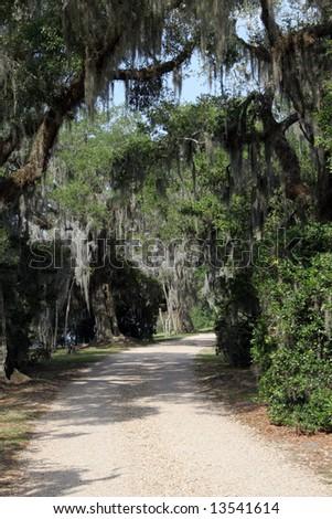 Gravel Road through Swamp with Spanish Moss - stock photo