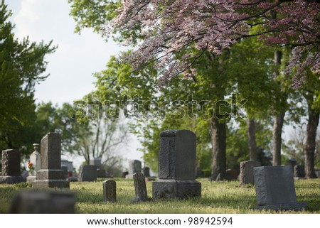 Gravestones in a cemetery with a budding dogwood in the spring. - stock photo