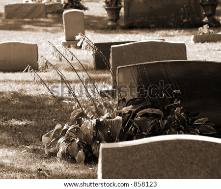 Gravestones representing death with a flowering plant signifying life.